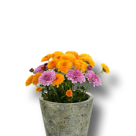 Potted flowering plants